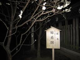 080302yushima4