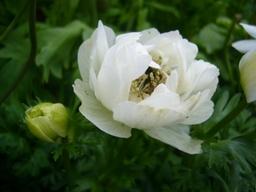 080421macroflower1