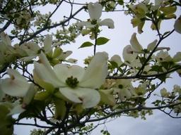 080421macroflower2