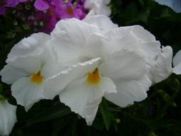 080421macroflower3