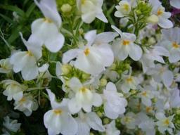 080421macroflower4