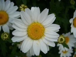 080421macroflower5