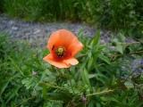 080501flower1_2