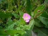 080501flower2_2
